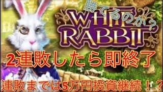 オンラインcasino【White Rabbit】2連敗したら即終了!!儲かるか?
